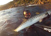 Pratiquer la chasse sous-marine